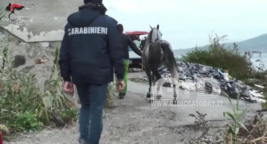 corse cavalli clandestine3