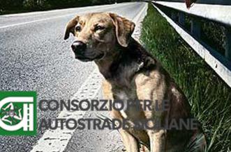 campagna-contro-labbandono-dei-cani-in-autostrada