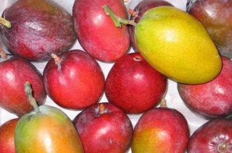 copy-of-cupitur-varie-cultivar-di-mango