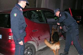foto di repertorio Carabinieri cinofili in attività