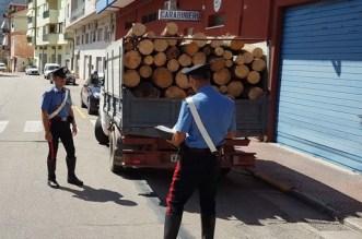 Repertorio furto di legname