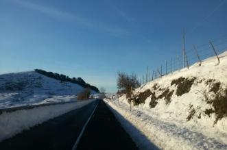 floresta - neve