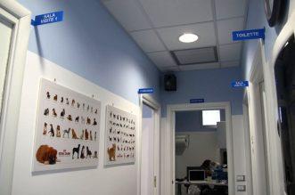 Ambulatorio-Veterinario-800x509