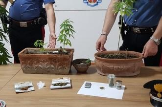 detenzione di droga